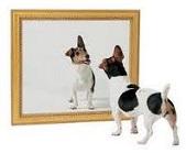 El perro aterrado y la percepcion erronea