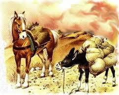 caballo y as